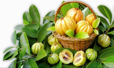 How is consumed garcinia cambogia for weight loss