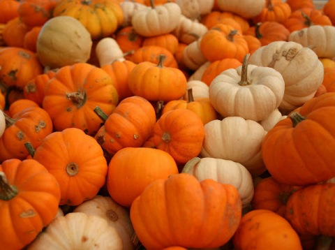 pumpkin for weight loss