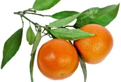 benefits of tangerine